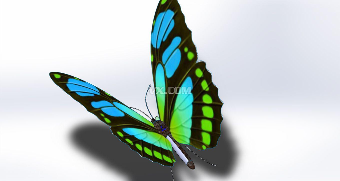 花蝴蝶图片大全内容|花蝴蝶图片大全图片