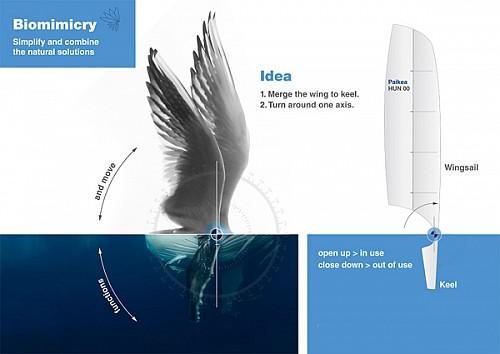身体的形状设计灵感来源于鲸类动物的流体曲线造型