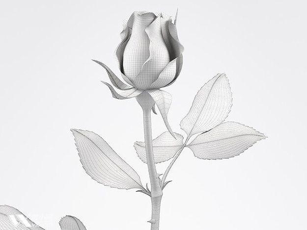 素描玫瑰花图片图片展示_素描玫瑰花图片相关图片下载